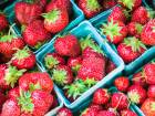 Strawberry prices fall to Dh10 a kilogram