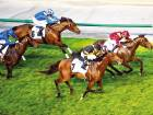 The Right Man (No. 3), ridden by jockey Francois Xavier Bertas and trained by Didier Guillemin, wins Al Quoz Sprint during the Dubai World Cup meeting at Meydan.