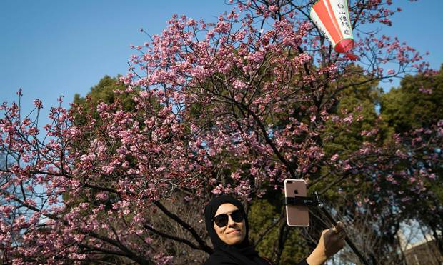 Cherry blossoms spread Tokyo cheer