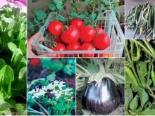 Home farming picks up in the UAE
