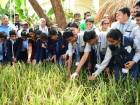 These students harvest rice in the land of oil