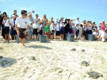 50 turtles released after rehabilitation