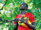 A farmer carries cocoa pods at a cocoa farm in Agboville, Ivory Coast