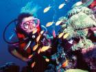 Unesco has 'serious concern' on coral bleaching