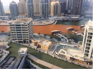 Cause for sluggish water in Dubai Marina found