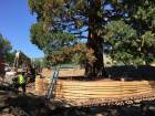Workers build a burlap, plywood and steel-pipe structure to contain the rootball so they can move the roughly 100-foot sequoia tree in Boise, Idaho.
