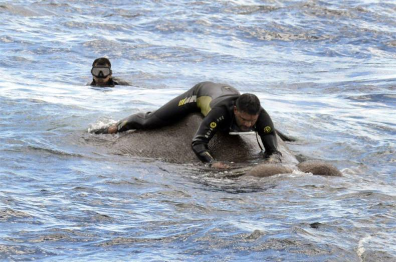 sri-lankan-navy-rescues-elephant-washed-out-to-sea
