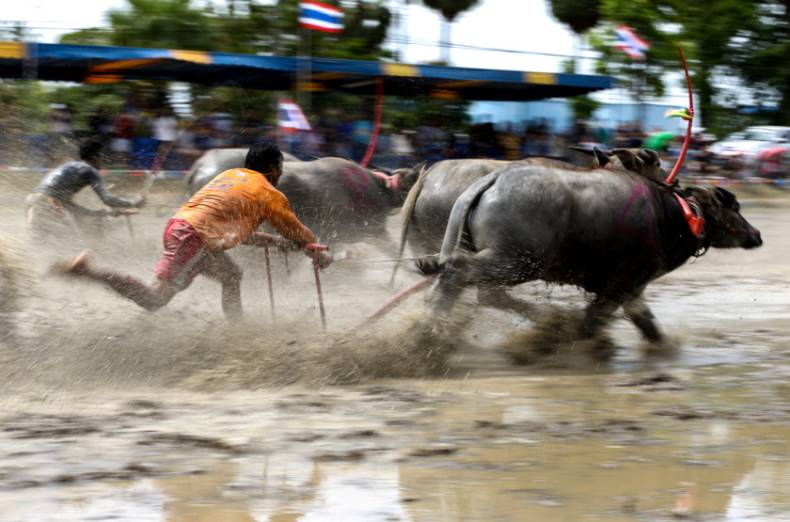 copy-of-2017-07-16t103202z-1266484103-rc1994ca2fd0-rtrmadp-3-thailand-buffalo-race
