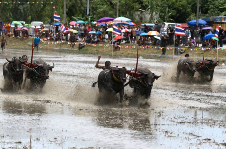 copy-of-2017-07-16t103130z-398476768-rc178df16640-rtrmadp-3-thailand-buffalo-race