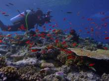 'Chasing Coral' has an urgent message