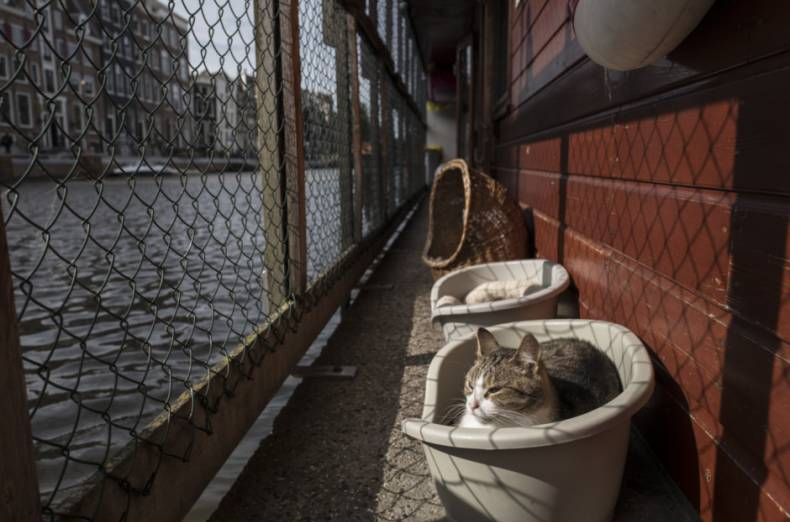 copy-of-netherlands-boat-for-cats-photo-gallery-86116-jpg-81e20