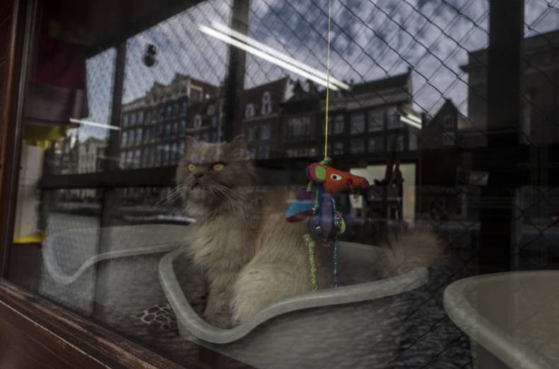copy-of-netherlands-boat-for-cats-photo-gallery-29258-jpg-723c4