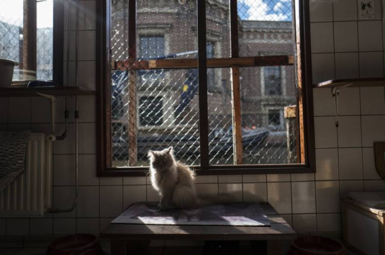 copy-of-netherlands-boat-for-cats-photo-gallery-24446-jpg-94b3c