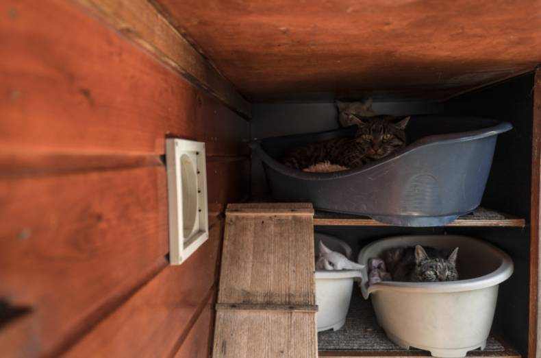 copy-of-netherlands-boat-for-cats-photo-gallery-58347-jpg-1e2c7