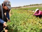 UAE farmers to get seeds, fertilisers