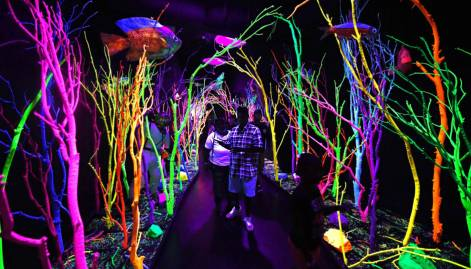 Pictures: A new world inside Meow Wolf