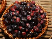 Myths about the date palm debunked