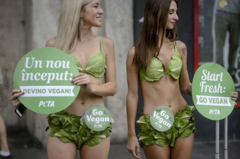 copy-of-romania-vegan-lettuce-ladies-15821-jpg-52538