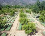 Pakistan's 'Billion Tree Tsunami' impresses