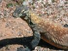 There's more to Komodo than the lizards