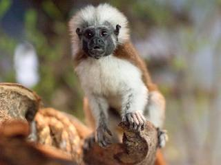 Meet the new monkeys at Green Planet Dubai