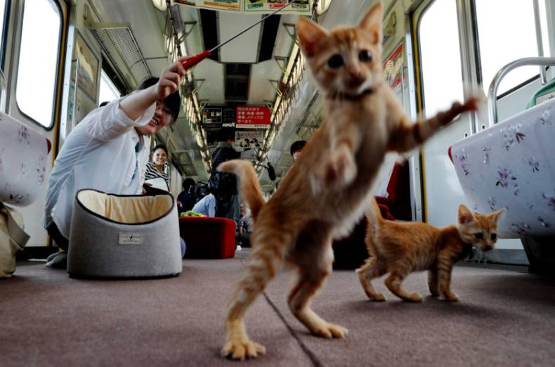 copy-of-2017-09-10t074712z-1709245727-rc1c69669310-rtrmadp-3-japan-train-cats