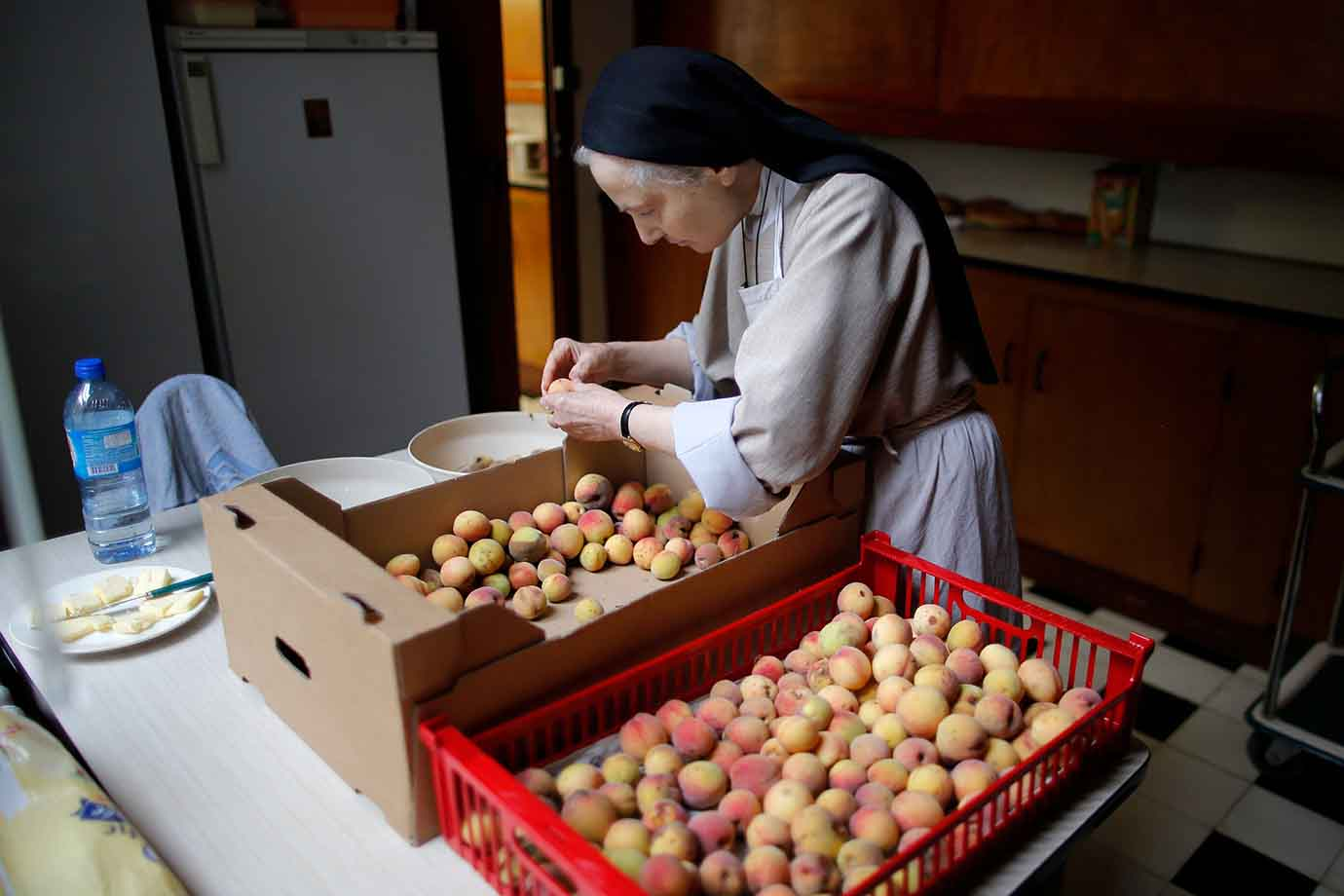 A sister, member of the Clarisses community, handpicks apricots at the Saint Clare Monastery in Nant