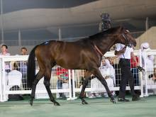 Horses worth Dh5m sold at Racing in Dubai Sale