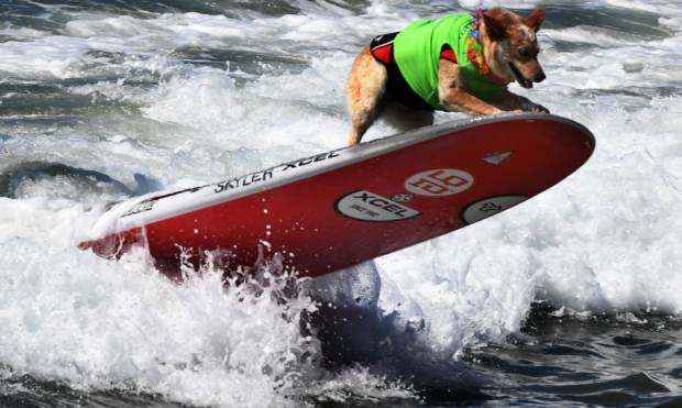 In pictures: 9th Annual Surf City Surf Dog