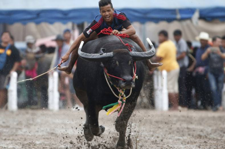 copy-of-aptopix-thailand-water-buffalo-race-91120-jpg-b3769