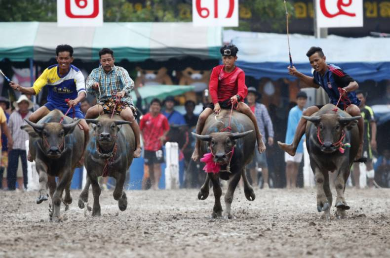copy-of-thailand-water-buffalo-race-12390-jpg-92bf1