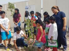 Trees stand tall in Jebel Ali