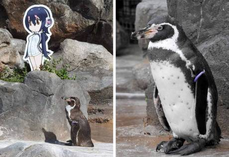 Penguin in love with cartoon character dies