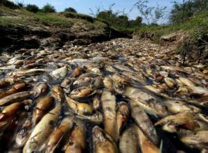 Thousands of fish die in Paraguay river