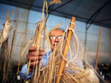 Safeguarding seeds that may feed the future