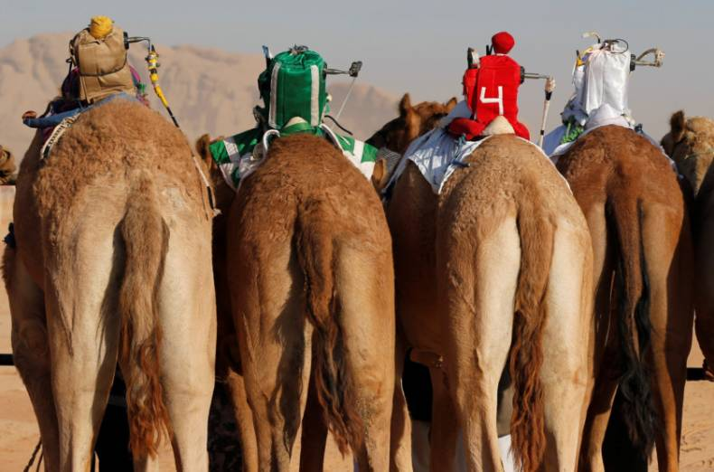 copy-of-2017-11-02t115752z-893038130-rc1193321ae0-rtrmadp-3-jordan-camelrace