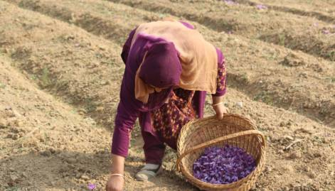 India's saffron capital