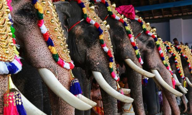 Elephants, trumpets & drums at a Kochi festival