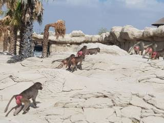 Dubai Safari public opening in January
