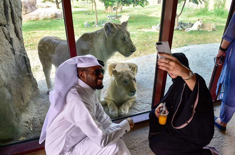 a-couple-taking-selfie-with-white-lions-at-the-dubai-safari-during-its-soft-launch