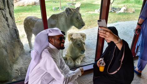 Pictures: Dubai Safari's soft launch