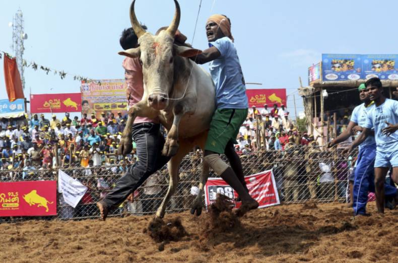 copy-of-aptopix-india-bull-taming-festival-60688-jpg-1ed22