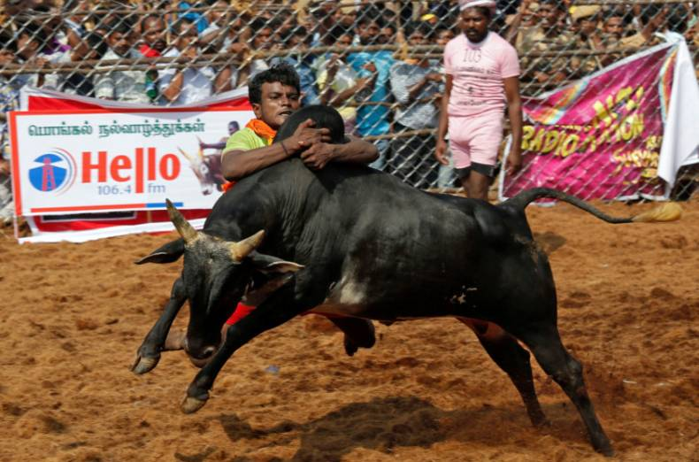 copy-of-2018-01-15t122527z-437279274-rc1d4ddf34e0-rtrmadp-3-festival-pongal-india-bulltaming