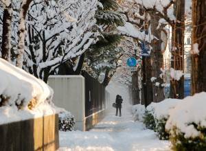 Pictures: Tokyo digs out from heavy snow