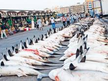 UAE bans shark fishing till June 30