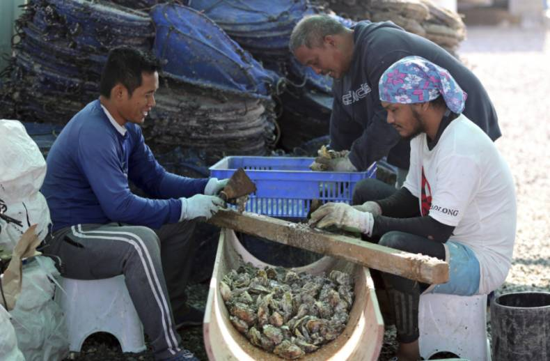 copy-of-emirates-oysters-41584-jpg-81325-1