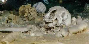Ancient human remains found in Mexican cave
