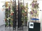 Exotic flowers draw huge crowds in Dubai