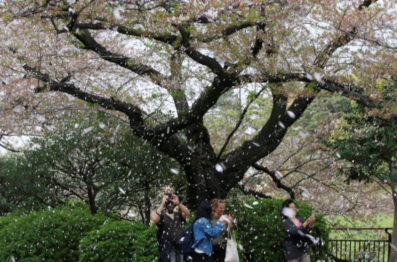 copy-of-2018-04-02t083659z-1963551893-rc1aa2589830-rtrmadp-3-spring-cherryblossoms-japan