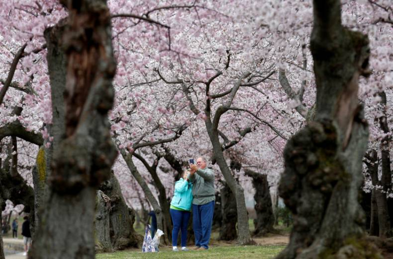 copy-of-2018-04-04t015807z-1268518974-rc1aad43e930-rtrmadp-3-spring-cherryblossoms-washington